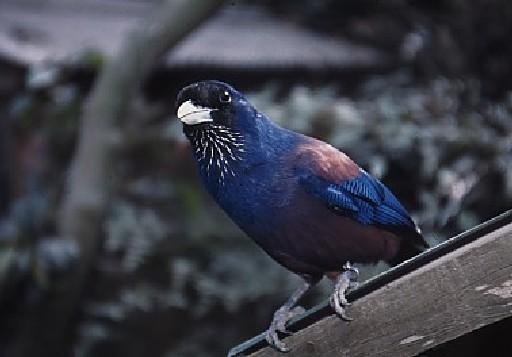 沖縄県が募集対象の鳥の里親募集情報(3ページ目) :: ペットのおうち【月間利用者150万人!】