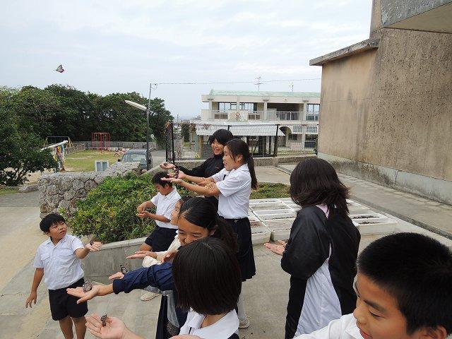 喜界島移動博物館:自然紹介授業